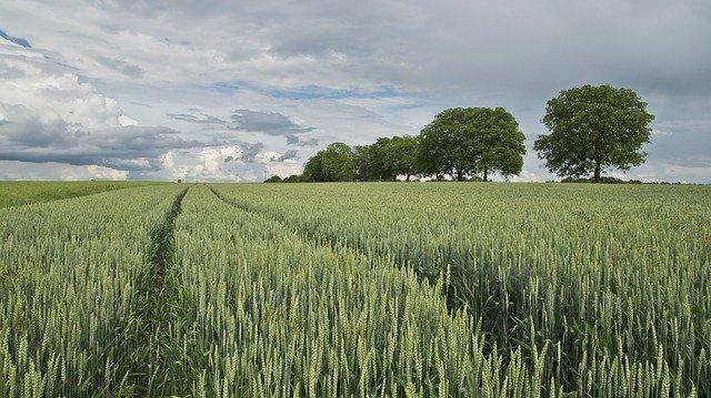 Brzeziny i rolnictwo kwitnące w cieniu zanieczyszczonego powietrza