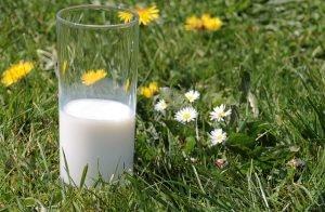 Od mleka po rowery