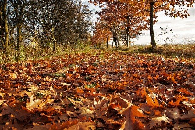 gdy liście spadają z drzew