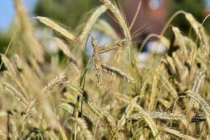 Biała Rawska: praca wciąż w sektorze rolniczym